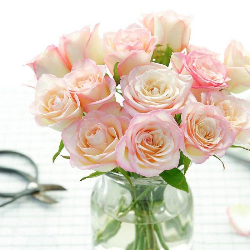 【周期购】玫瑰包月,4次/月,每周不一样的玫瑰花