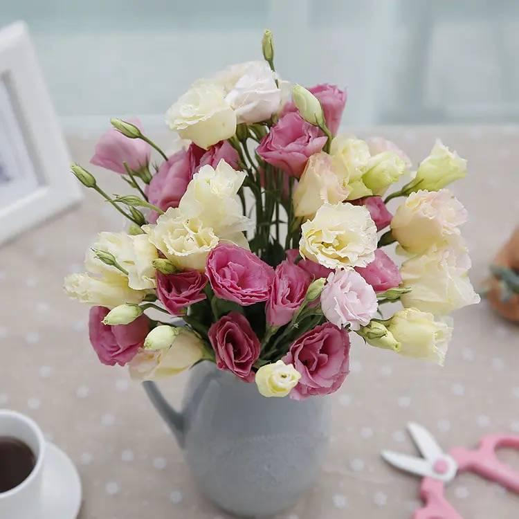 【洋桔梗】龙胆·真诚不变的爱,绽放美丽的翩翩仙子